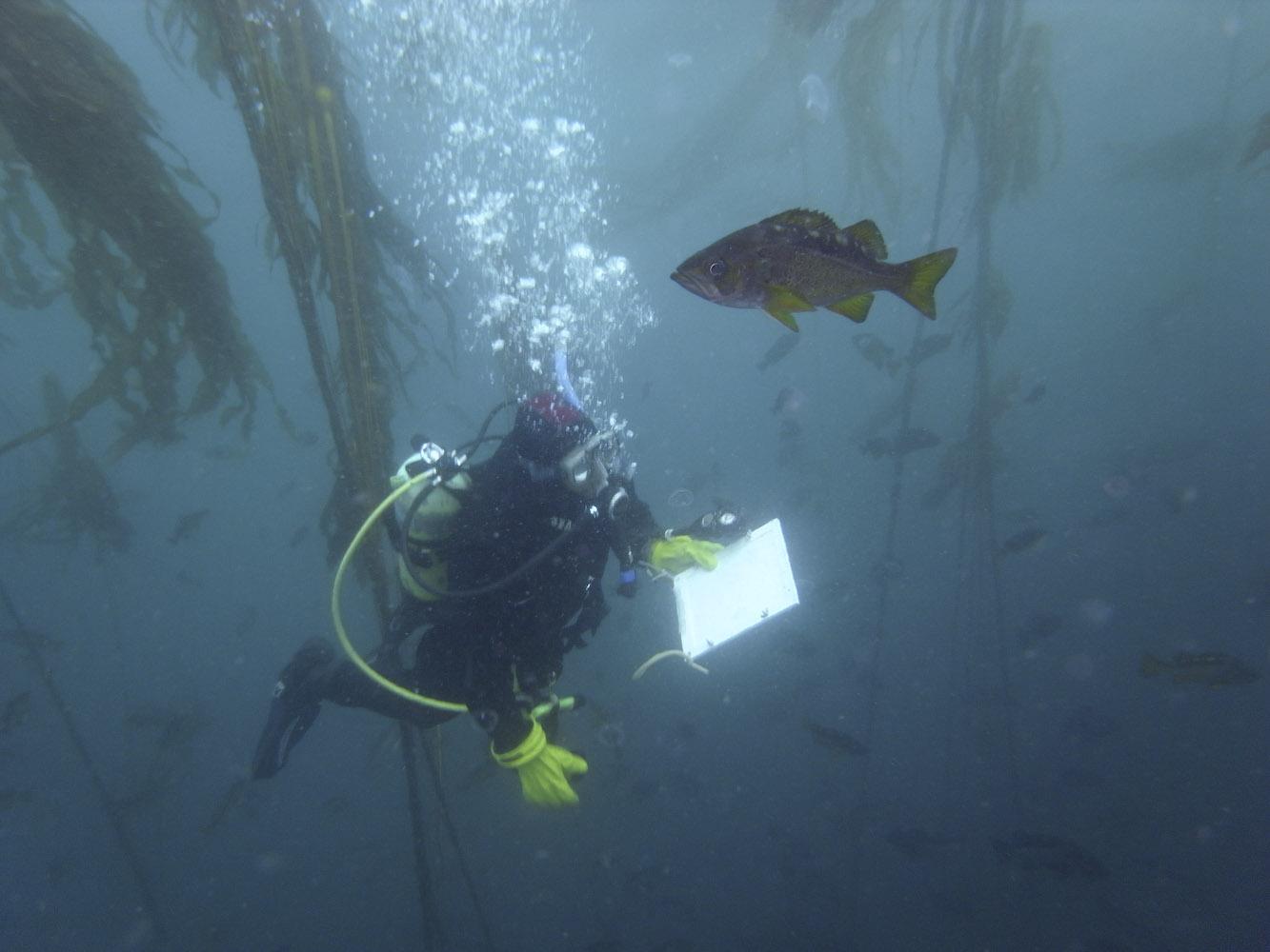 Diver monitoring underwater habitat